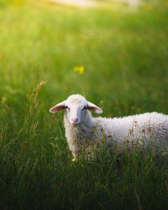 בנאות דשא ירבצני