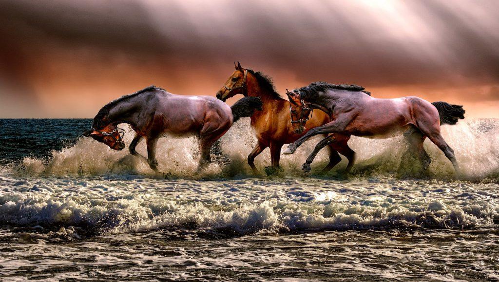 שירת הים והודיה לבורא עולם